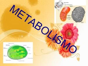 metabolismo-homem-mulher